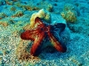 tiny-bubbles-scuba-diving-maui-knobby-seastar