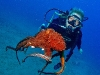 tiny-bubbles-scuba-diving-maui-marcia-octopus