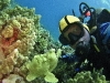 tiny-bubbles-scuba-diving-maui-tim-frogfish