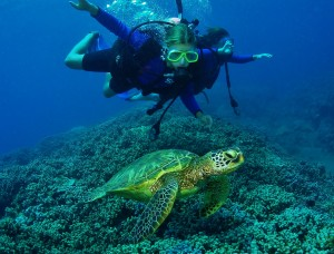 Divers and Green Sea Turtle with Tiny Bubbles Scuba