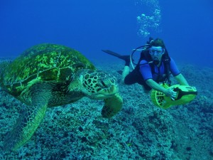 Scuba diver with a Green Sea Turtle and Tiny Bubbles Scuba