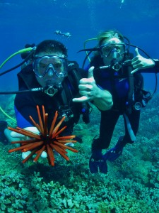 Scuba Divers with a Slate Pencil Sea Urchin at Olowalu , Maui with Tiny Bubbles Scuba
