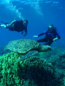 Scuba divers with Hawaiian Green Sea Turtle at Olowalu, Maui with Tiny Bubbles Scuba