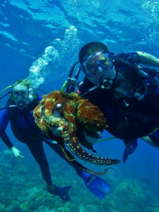 Divers with Octopus at Olowalu, Maui with Tiny Bubbles Scuba
