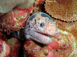 Tiger Snake Eel with Tiny Bubbles Scuba
