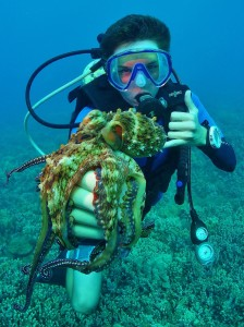 Scuba Diver & a Day Octopus with Tiny Bubbles Scuba in Maui