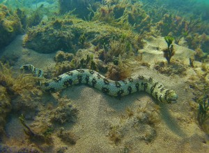 Snowflake Moray Eel in Maui with Tiny Bubbles Scuba