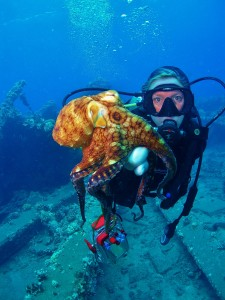 Marcia making friends with a Octopus at Mala Ramp with Tiny Bubbles Scuba