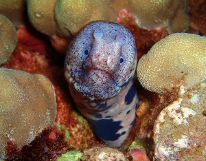 Large Spotted Snake Eel with Tiny Bubbles Scuba