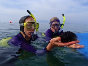 Collector Sea Urchin with Snorkelin' Sisters