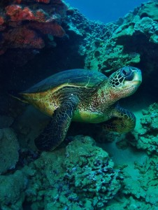 Turtle waking up with Tiny Bubbles Scuba