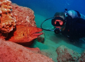 Yellow Margin Moray Eel and Scuba diver with Tiny Bubbles Scuba