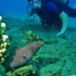 Diver with a White Mouth Moray Eel and Tiny Bubbles Scuba