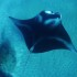 16' MANTA at Olowalu, Maui with Tiny Bubbles Scuba