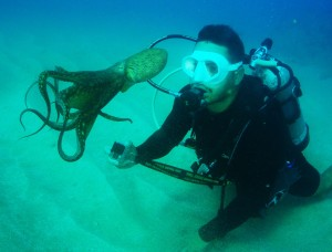 Octopus & Scuba Diver