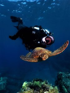 Green Sea Turtle and Diver with Tiny Bubbles Scuba