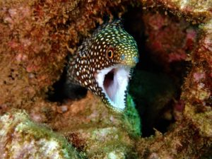 White Mouth Morey Eel with Tiny Bubbles Scuba