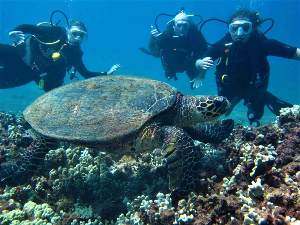 Diver Family with Hawksbill Turtle at Airport Beach with Tiny Bubbles Scuba