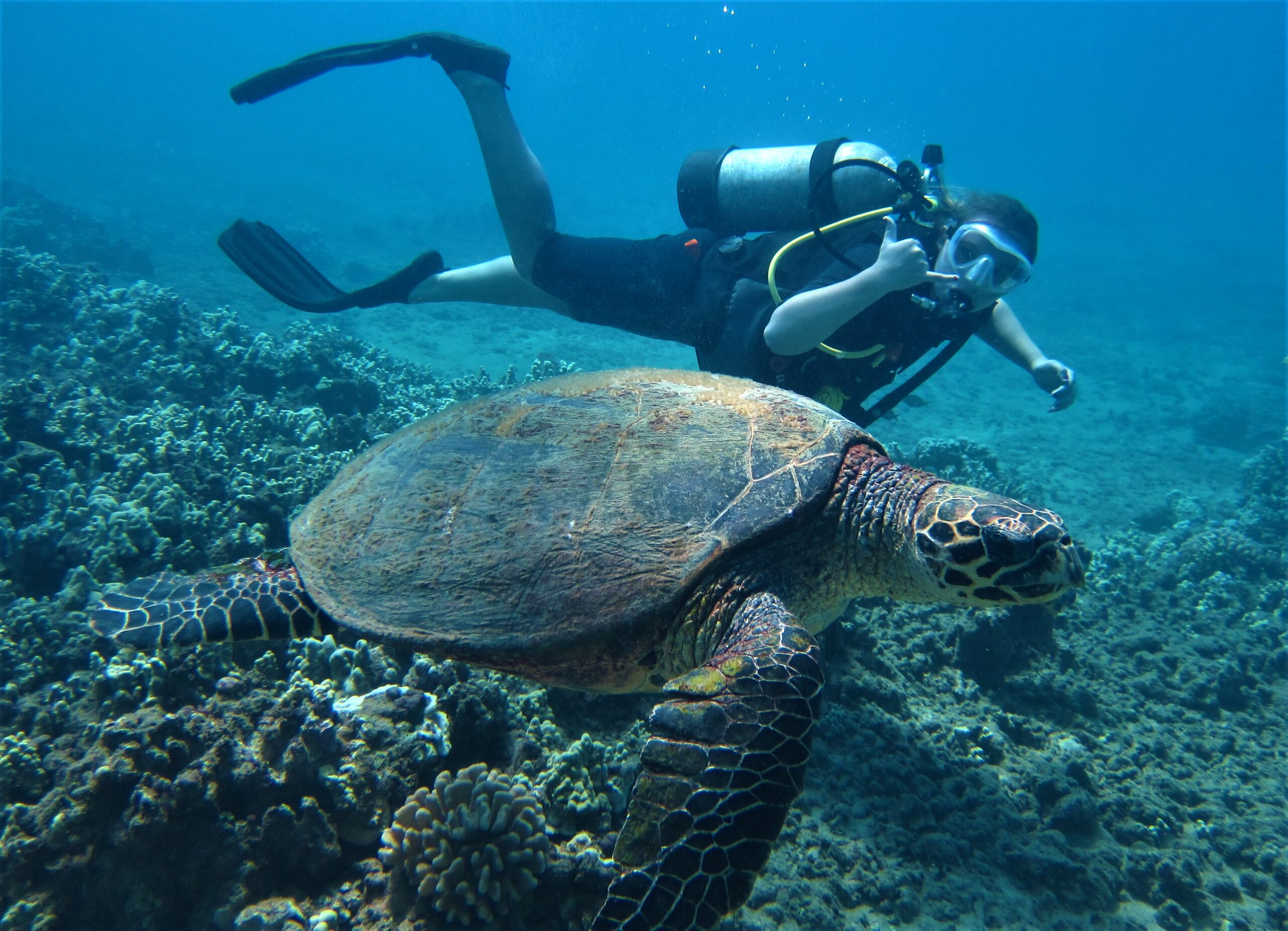 Diver with Hawksbill Turtle at Airport Beach with Tiny Bubbles Scuba